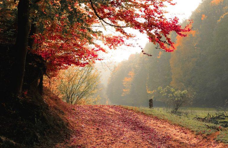 valmarecchia-eventi-autunno